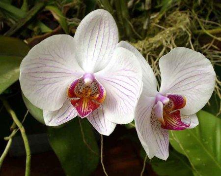 Уход за комнатным цветком орхидея