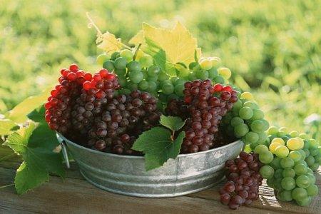 Можно ли виноград беременным  фото