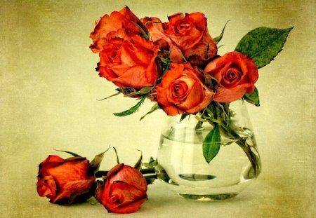 Как подольше сохранить розы фото