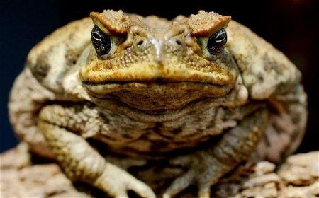 Приснилась жаба фото