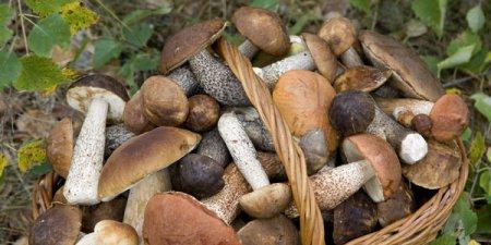 Приснились грибы собирать фото