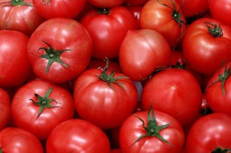помидоры красные фото