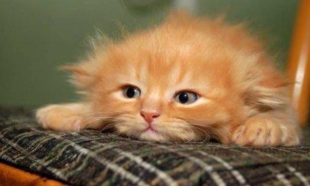 Приснился рыжий котенок фото