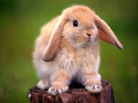 Если приснились кролики фото