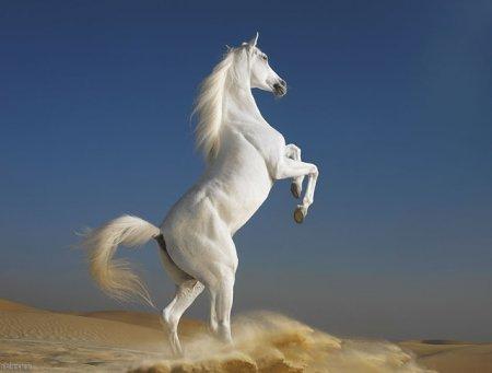Приснилась белая лошадь фото