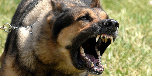 Собака сонник кусает ладонь за