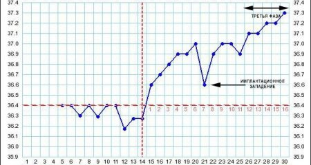 График БТ при наступлении беременности фото