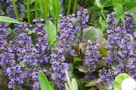 Тенелюбивые цветы для сада. Как правильно организовать цветник в тени и полутени?