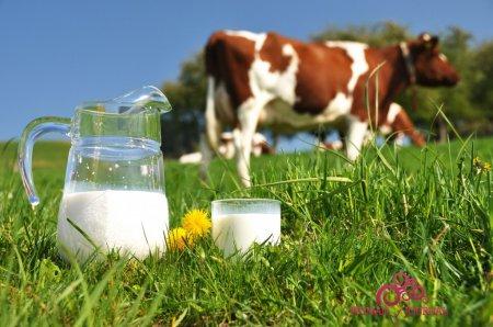 коровье молоко и корова