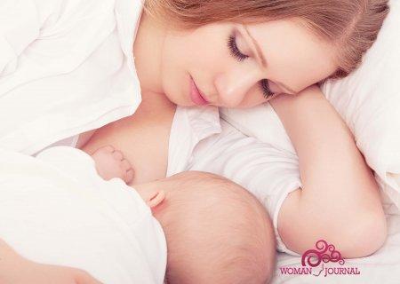 кедровые орехи и сосновая ветка кормящая мать и малыш